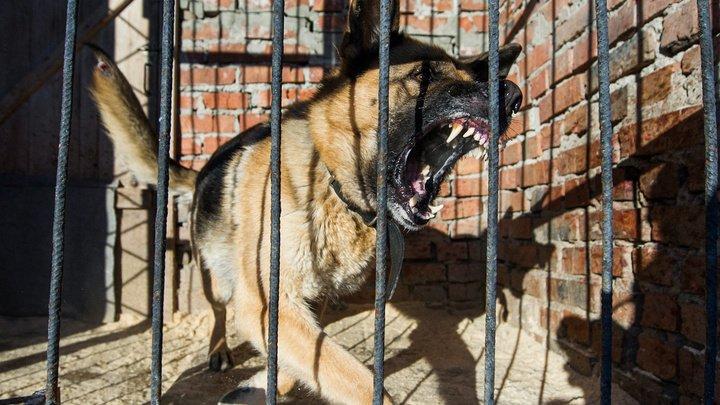В Китае решили клонировать полицейских собак вместо того, чтобы дрессировать новых