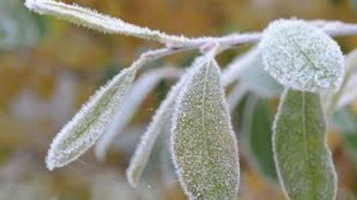 Заморозки сохранятся: синоптики объявили ЖЕЛТЫЙ КОД
