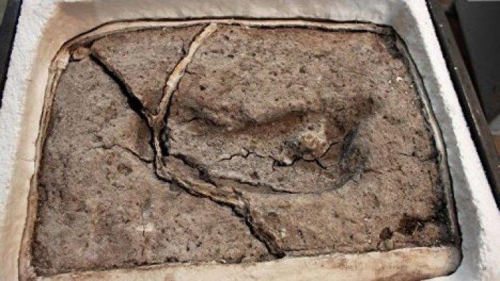 Найден самый древний след человека в Америке