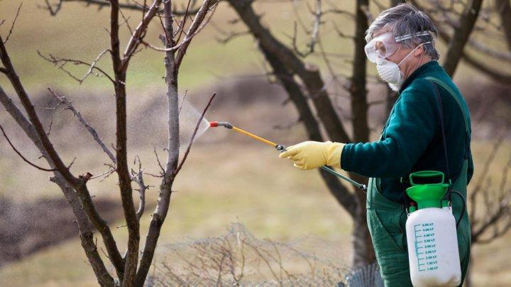 Фермеры заранее подготовились к заморозкам, опрыскав деревья спецраствором
