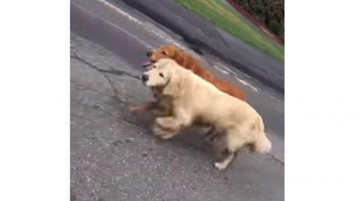 В США собаки пробежали по трассе с полицейским эскортом (видео)