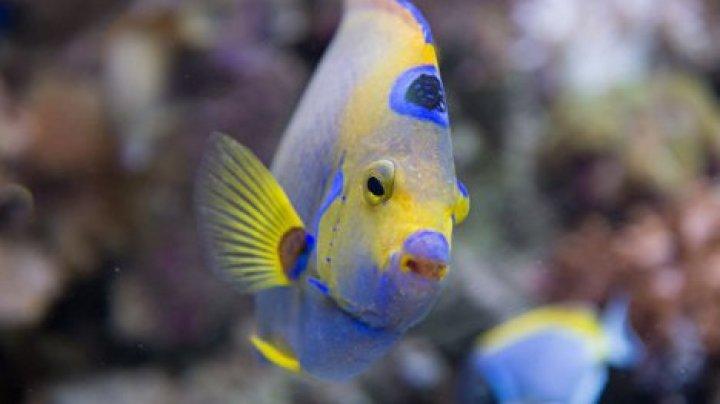 Американца арестовали за жестокое обращение с аквариумной рыбкой