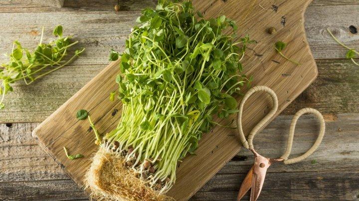 Новый для Молдовы бизнес: Кишиневец выращивает микрозелень