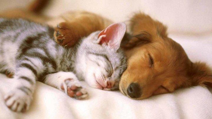 Ученые выяснили, кто счастливее, владельцы собак или кошек
