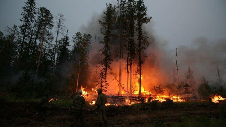 На Дальнем Востоке увеличивается площадь лесных пожаров