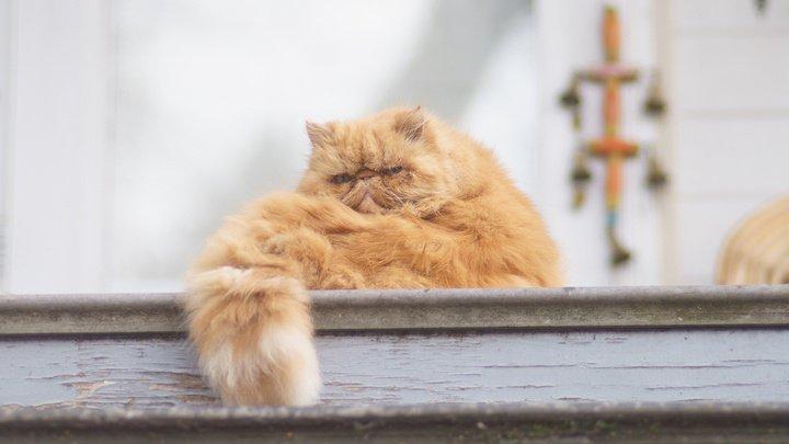 В США перестанут проводить эксперименты на кошках