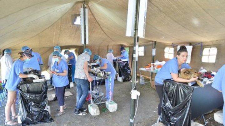 Ветеринары из Америки прибывшие в Кишинев стерилизуют 400 собак