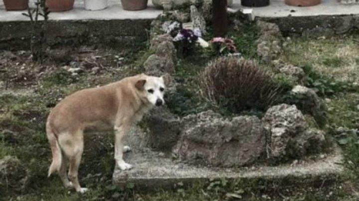 Ждавшая десять лет хозяина собака умерла у его могилы