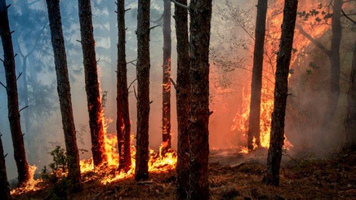 В Канаде более 600 спасателей пытаются справиться с лесным пожаром