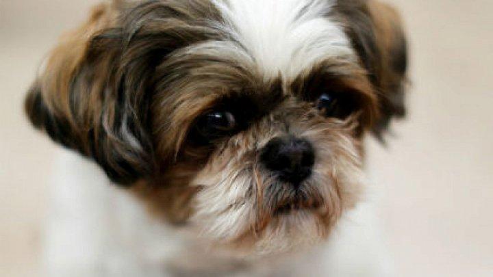 В США здоровую собаку похоронили вместе с хозяйкой