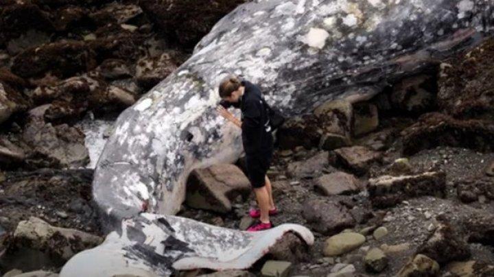 В США на Западное побережье выбросило 53 кита