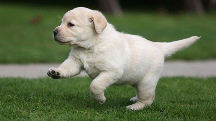 Ученые: Любовь к собакам заложена в генах