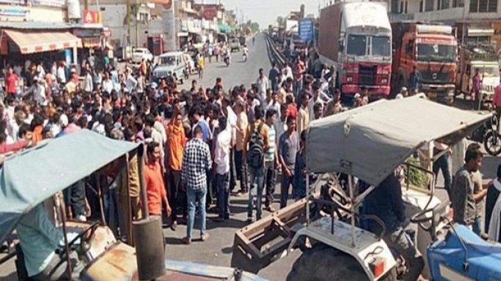 В Индии дикая мартышка покусала 10 человек, один погиб