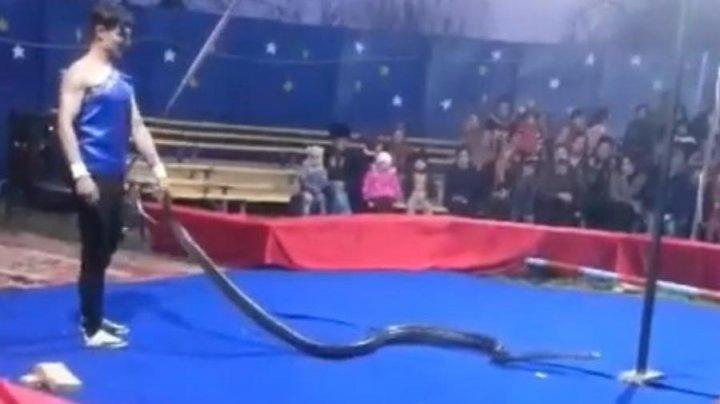 В Дагестане питон задушил артиста на цирковом представлении (видео 18+)