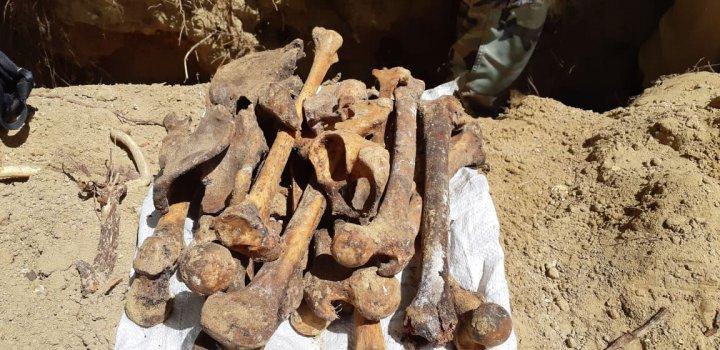 В парке Валя Морилор найдены человеческие останки