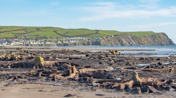 После шторма в Уэльсе нашли доисторический лес