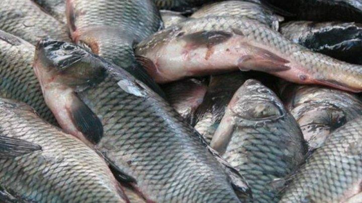 Почти 30 тонн рыбы с тяжелыми металлами и токсичными веществами обнаружили на рынках Румынии