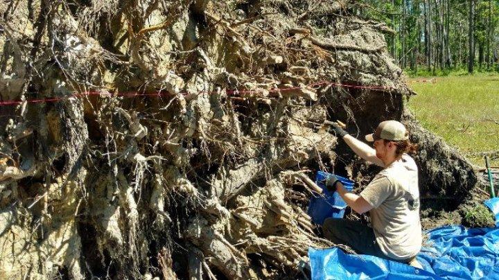 Ураган помог археологам раскопать старинный форт в США