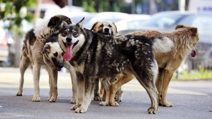 В столице стартует кампании по стерилизации бездомных собак
