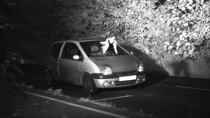 В Германии голубь спас водителя от штрафа в 100 тыс евро