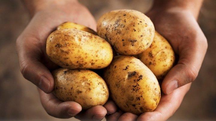 На молдавских рынках практически не осталось отечественного картофеля