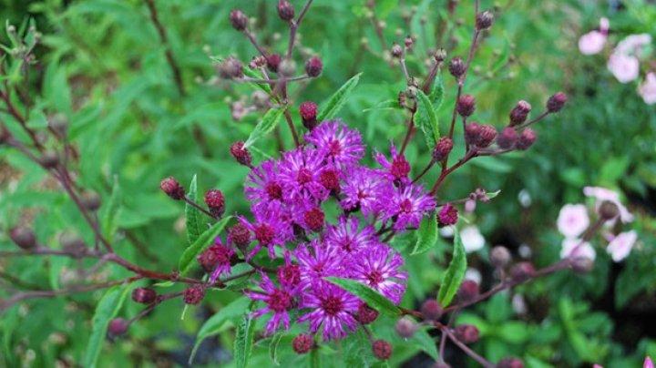 Ученые назвали растения, подавляющие рак