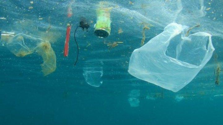 Два серфера собрали более 2 млн кг мусора в океане