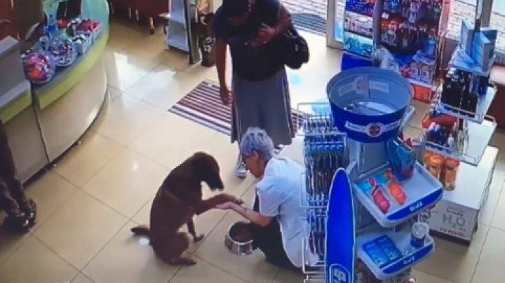 В Турции собака с раненой лапкой зашла в аптеку и попросила о помощи (видео)
