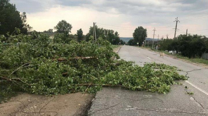 Непогода в Вулканештах: упавшее дерево оборвало линии электропередач