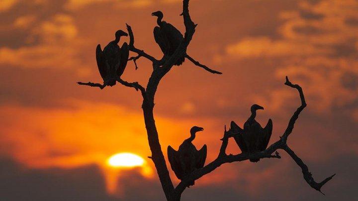 Более 500 птиц умерли в Ботсване от отравления тушами слонов