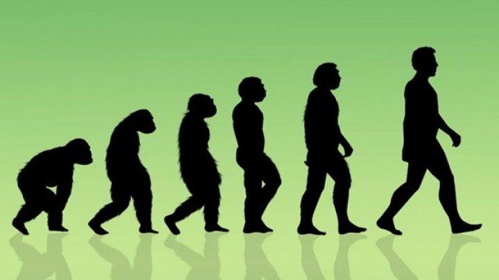 Ученые назвали причину эволюции человечества