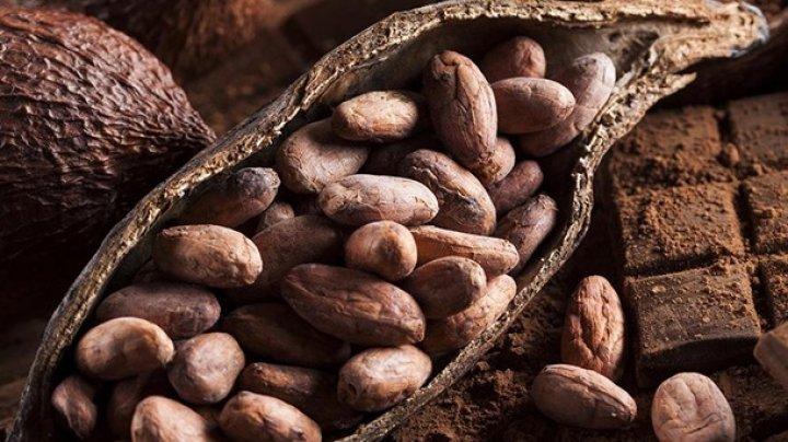 Ученые: Шоколад продлевает жизни и помогает похудеть