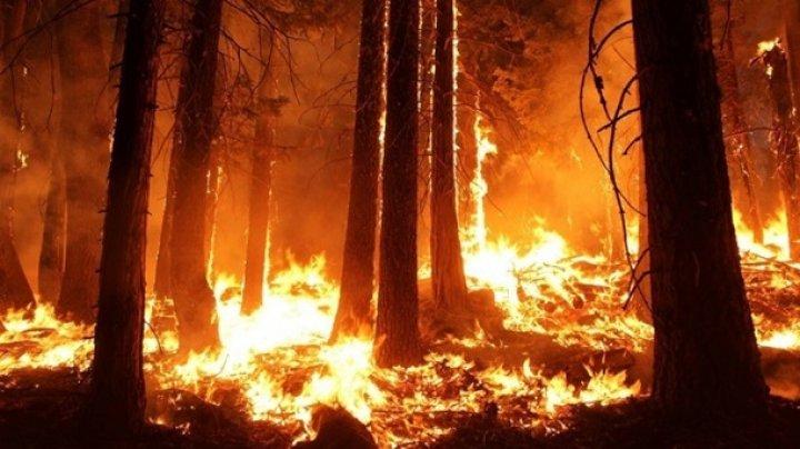 В Испании площадь лесного пожара достигла 5 тысяч гектаров