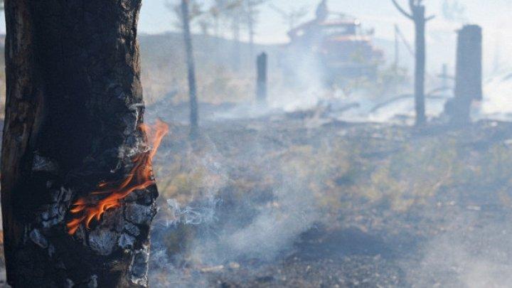Сильный лесной пожар произошел на северо-востоке Испании