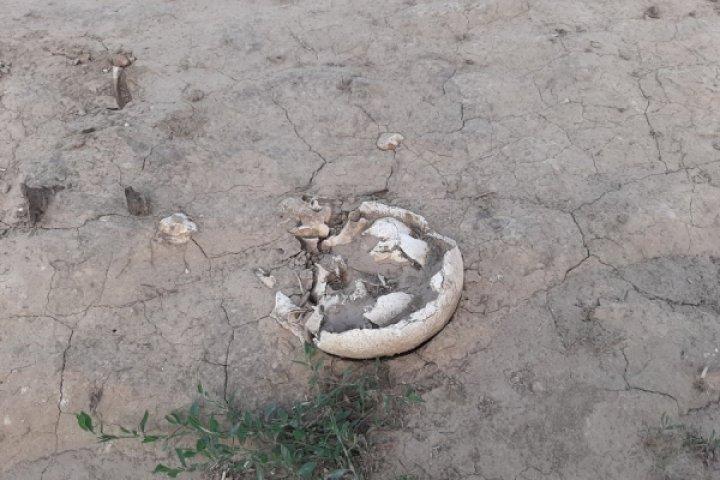 Страшная находка в селе Чишмикиой: В поле у дороги обнаружены человеческие останки (фото)