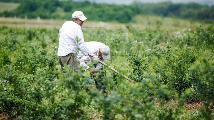 Фермеры из северных районов страны несут миллионные убытки