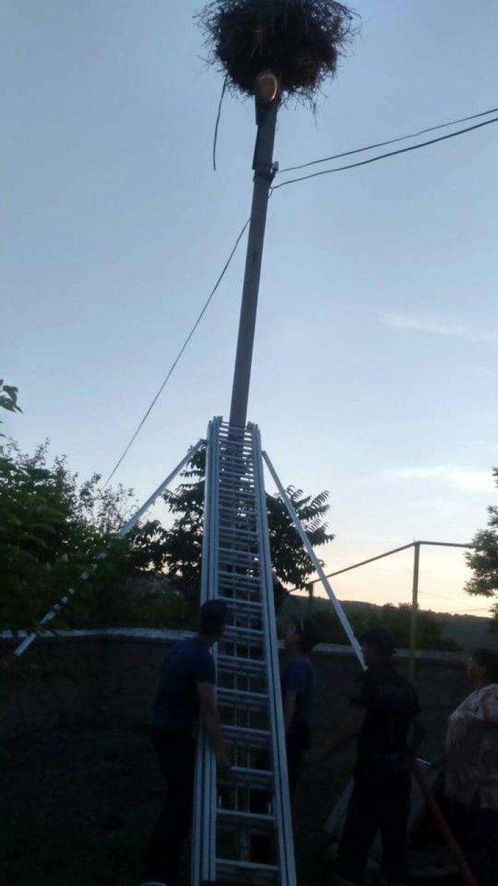 Спасатели вернули в гнездо упавшего аистенка в селе Бэлэнешты