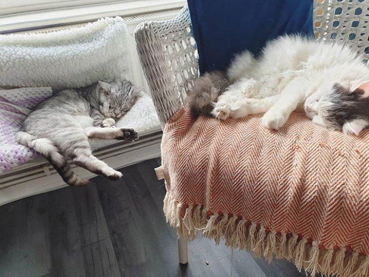 Самый грустный кот обрёл новый дом, и его история растопит сердце любого