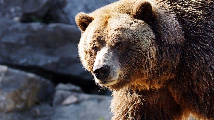 В США медведица укусила мужчину, пытавшегося спасти от нее свою собаку