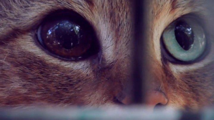 На Корсике открыли новый вид кошек