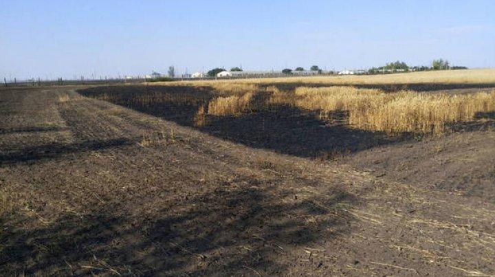 В Слободзее сгорело полгектара пшеницы