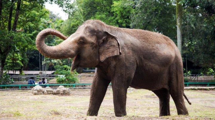 В Канаде слон напал на смотрителя зоопарка