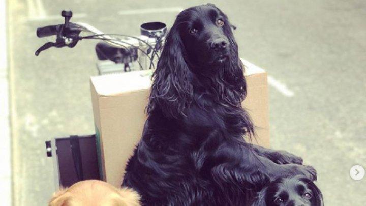 У брата Кейт Миддлтон угнали велосипед для собак