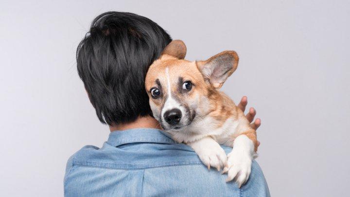 Нервные собаки бывают только у нервных владельцев