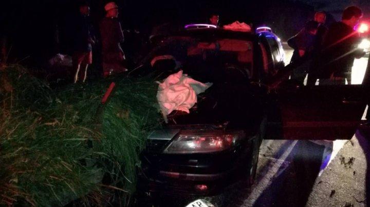 В результате аварии в Сынжерейском районе пострадал водитель повозки