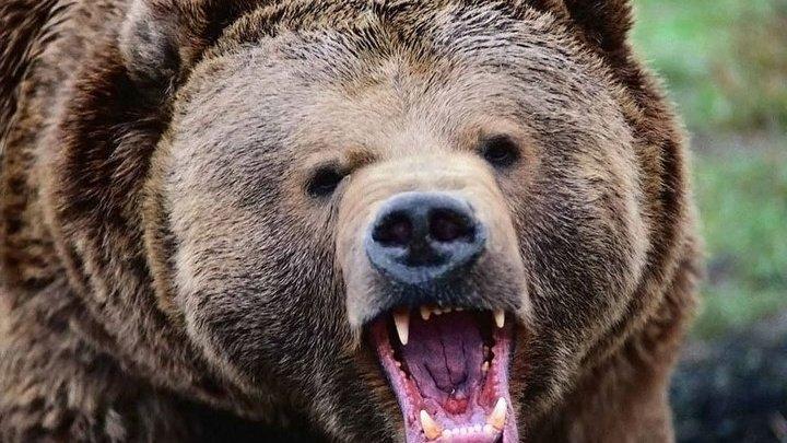 Говорящая мумия: в России мужчина прожил месяц в берлоге с медведем и остался живым (фото 18+)