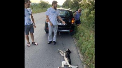Диакон Геннадий Вэлуцэ, который привязал собаку к машине, особой вины в своем поступке не видит