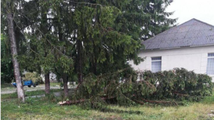 Непогода на севере Молдовы: в Бричанах сильный ветер повалил деревья
