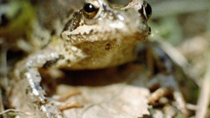 В Турции при обыске конфисковали три тысячи лягушек