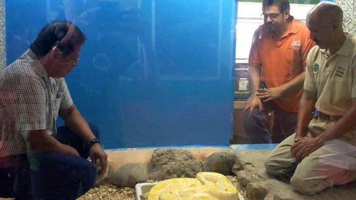 Питон напал на неосторожного смотрителя зоопарка (видео)